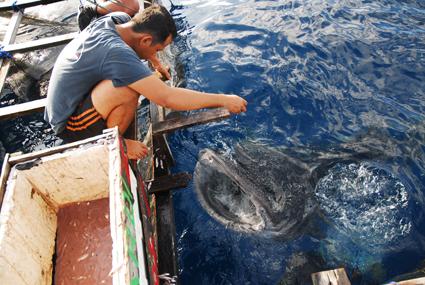 Pescador alimentando al ballena