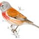 Identificador de aves de SEO Bird Life
