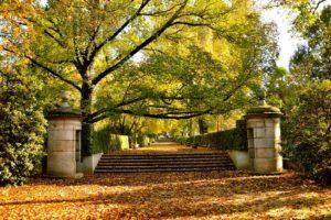 Patrimonio verde urbano: el Real Jardín Botánico en otoño